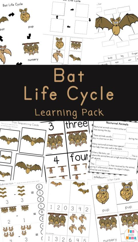 Bat-Life-Cycle-Learning-Pack.jpg
