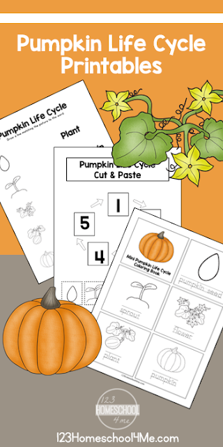 Free Life Cycle of a Pumpkin Printables.png