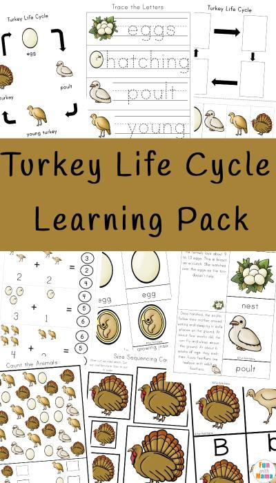 Turkey-Life-Cycle-Learning-Pack.jpg