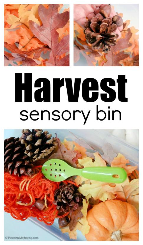 how-to-make-a-fall-harvest-sensory-bin.png