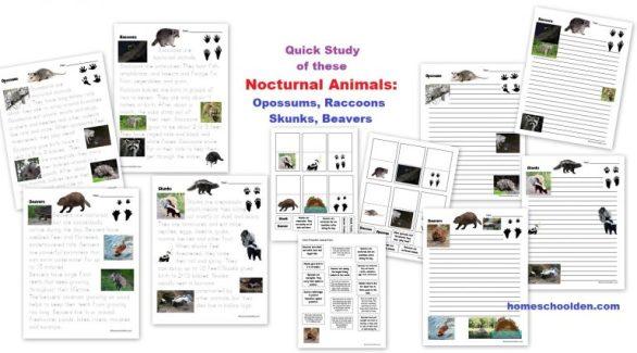 Nocturnal-Animal-Quick-Study-Opossums-Raccoons-Skunks-Beavers.jpg