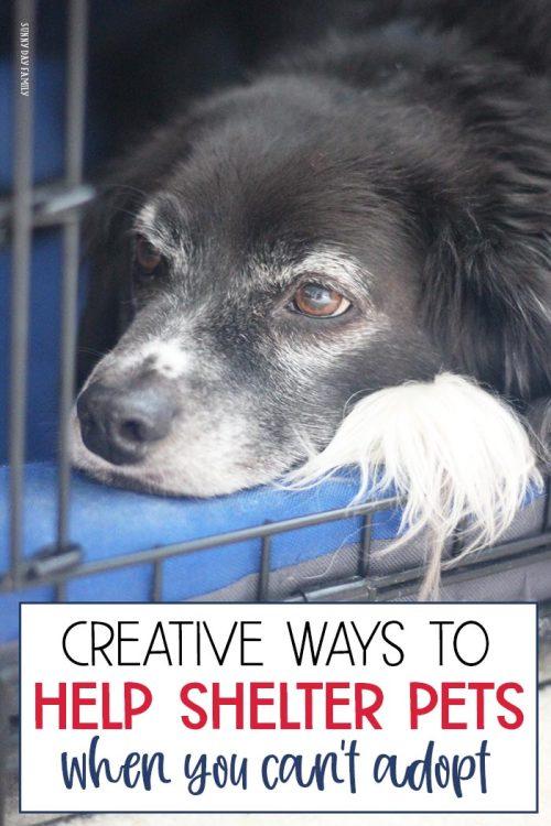 help-shelter-pets-pin.jpg