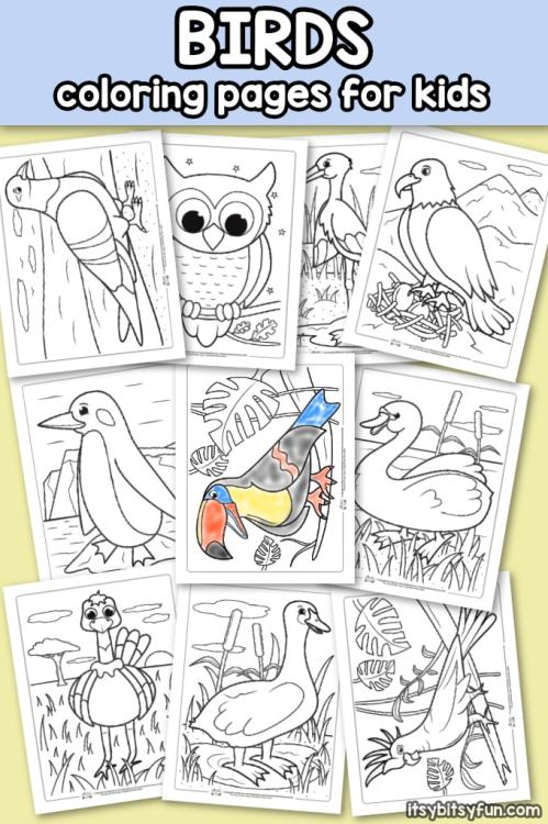 Free-Printable-Birds-Coloring-Pages-for-Kids.jpg