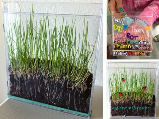 Grass-in-CD-Case.jpg