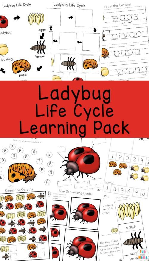 Ladybug-Life-Cycle-Learning-Pack.jpg