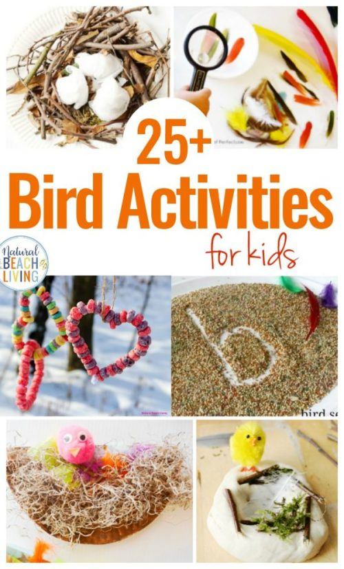 bird-activities-for-kids--600x993.jpg