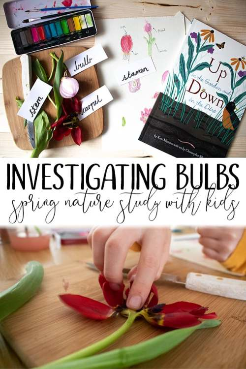 investigating-bulbs-spring-nature-study-with-kids.jpg