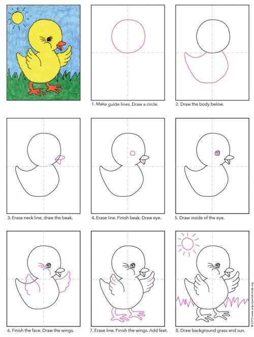 Baby-Chick-diagram-774x1024.jpg
