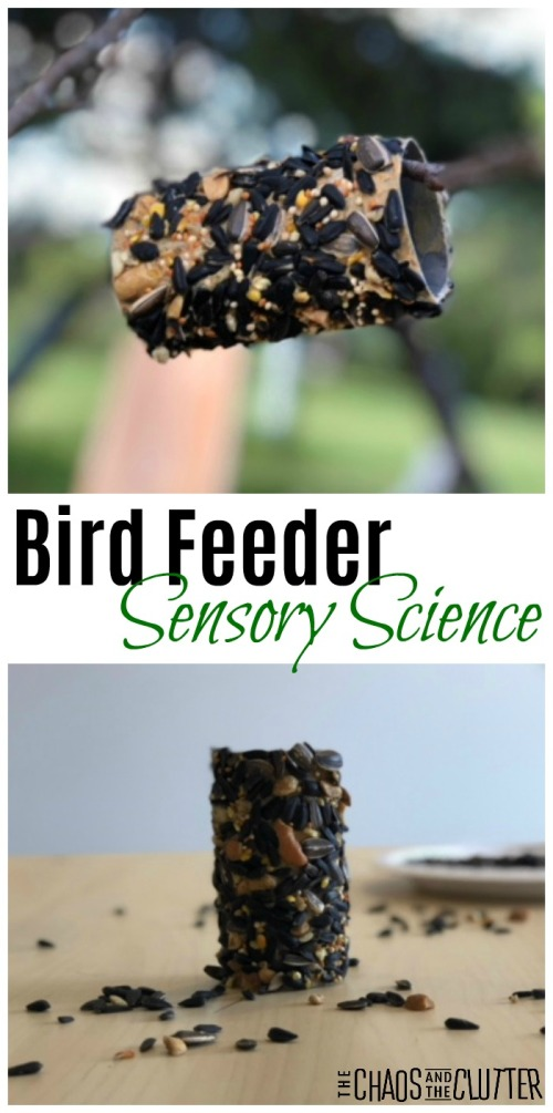 Bird-Feeder-Sensory-Science-Activity.jpg