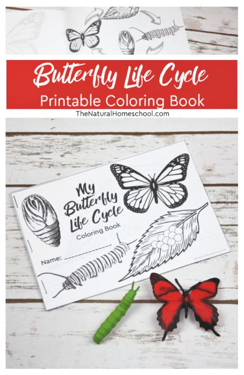 Butterfly-Life-Cycle-Book-Printable-will-Blow-your-Mind.jpg