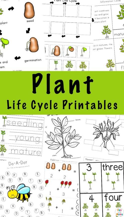 Plant-Life-Cycle-Printables.jpg