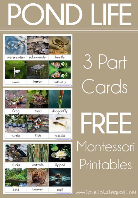 Pond-Life-3-Part-Cards-Montessori-Nomenclature-Free-Printables.png