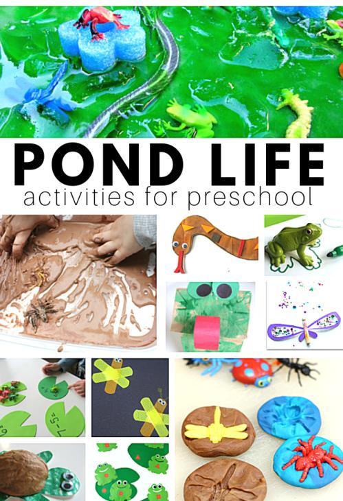 POND-LIFE.png